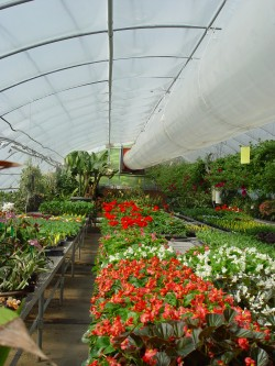 Ruth Warren Abbot Greenhouse