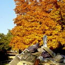 Fall 2008 at SC